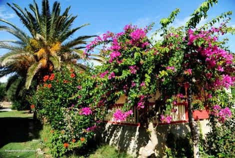 bunter Garten kreta apartment paleochora loupasses